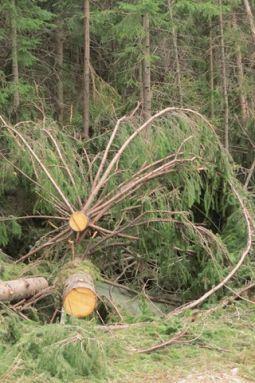 Wycinka drzew bez pozwolenia