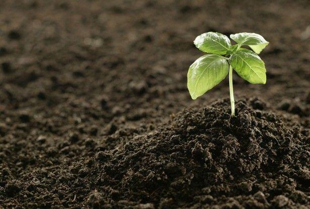Badanie gleby podstawą nawożenia