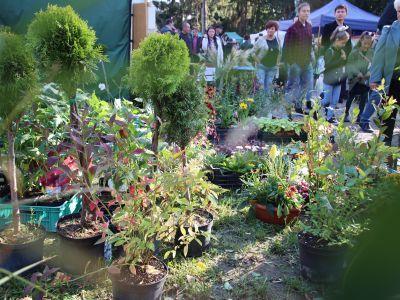 FOTOGALERIA - XVI Jesienna Giełda Ogrodnicza