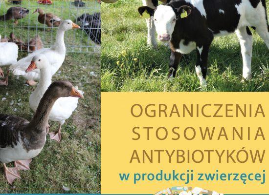 Ograniczanie stosowania antybiotyków w produkcji zwierzęcej